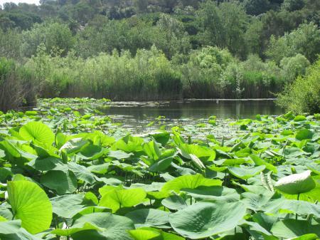 A l'étang, juin 2014...