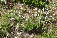 j2-tapis-fleurs-blanche.JPG
