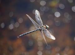 4427118_5_4d7a_les-insectes-comme-cette-libellule-de_4740eb92c6b5a9bdcb60c3e45680e17a.jpg